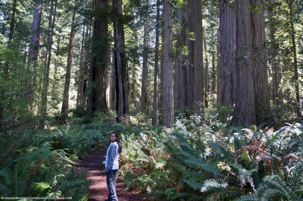 There is a sense of joy, humility, and pride walking through ancient redwood trees at Lady Bird Johnson Grove Trail in Klamath, California.