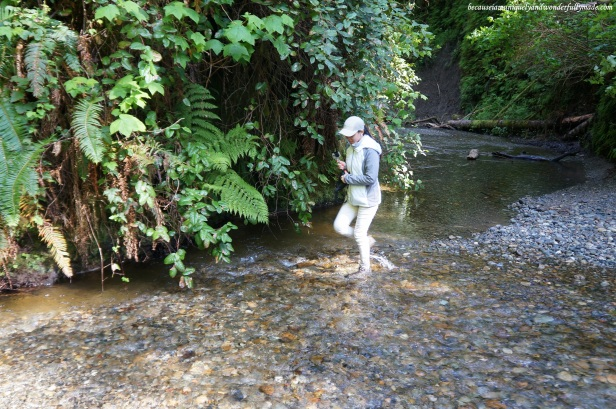 Fern Canyon Trail Loop requires a lot of wading through Home Creek waters.