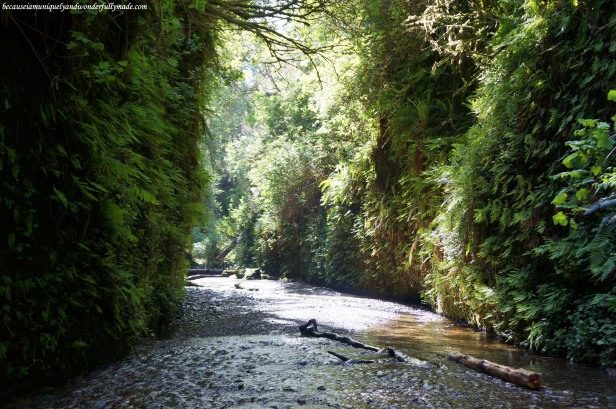 Looking at this view of Fern Canyon is like looking at the world through time. This canyon was carved by erosion millions of years ago.
