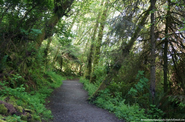 Walking towards the start of the Fern Canyon Loop Trail at Redwood National and State Park in California.
