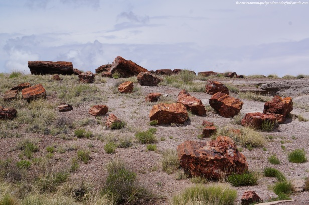 Every piece of petrified specimen at Petrified Forest National Park is protected by law. Removal or damage of a specimen is punishable by law.