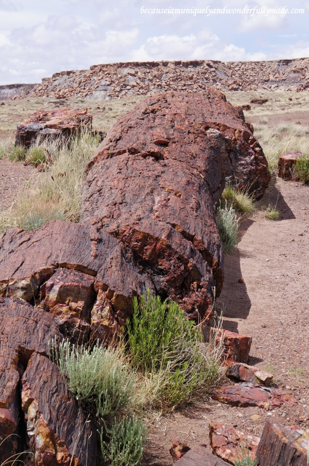 Fossilized tree at Giant Logs trail at Petrified Forest National Park in Arizona.