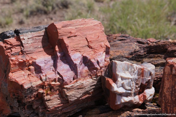 Beautiful chunk of a fossilized wood along the Giant Logs Trail at Petrified Forest National Park in Arizona.