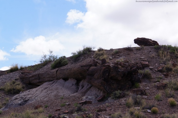 The Petrified Forest is a result of a process that took thousands of years. Erosion exposed these vast land of petrified plants and animals, but this one of the logs along the Giant Logs trail that still needs more time and more erosion.