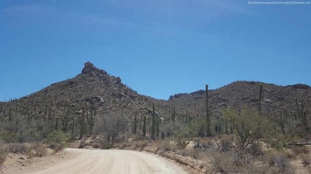 Beautiful drive towards Red Hills Visitor Center at Saguaro National Park in Tucson, Arizona.