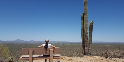 The top of the Valley View Overlook trail in Saguaro National Park offers a magnificent sight of the Avra Valley and the Picacho Peak can be viewed to the north.