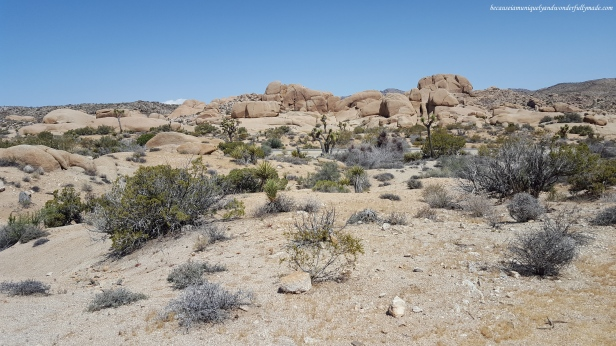 Geologists estimate that the unique rock formations scattered around Joshua National Park were formed over 100 million years ago.