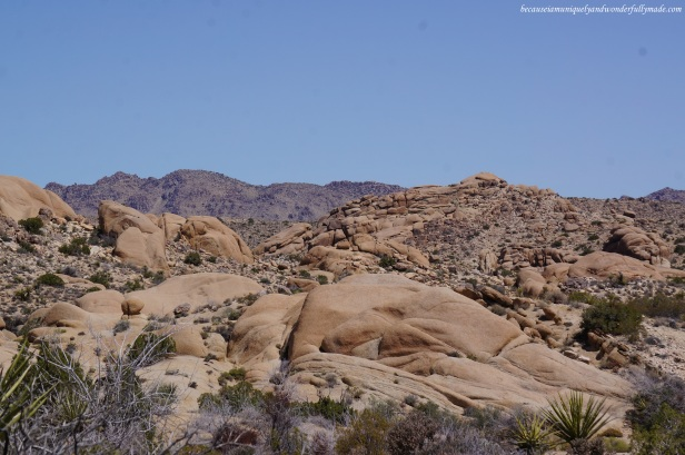 Out-of-this-world landscape along the trail towards the Skull Rock formation in Joshua Tree National Park.